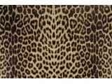 Panther/ natural - Panther Lycra double printed