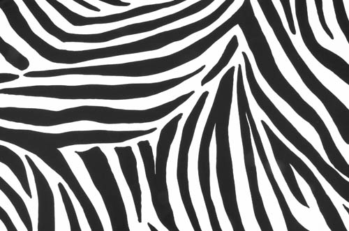 Zebra/ white-black - Zebra Lycra