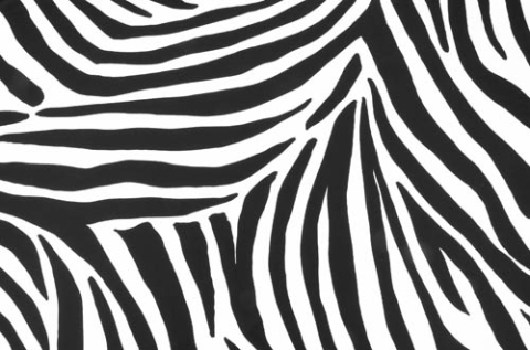 Zebra/ white-black