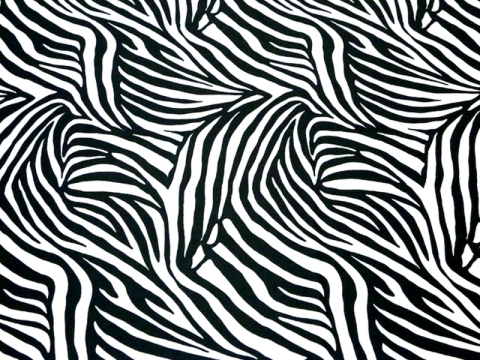 Dynamic Zebra/ white-black CHR-C