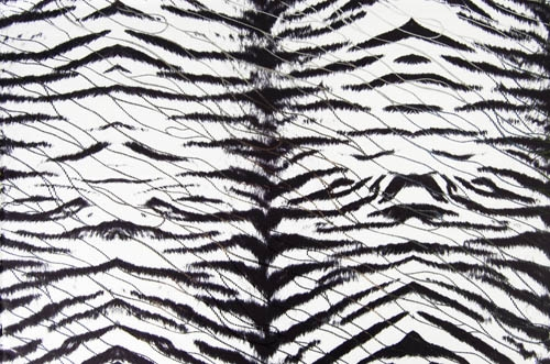 Tiger  - lycra/white-black